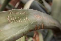 Grafitti'd cactus