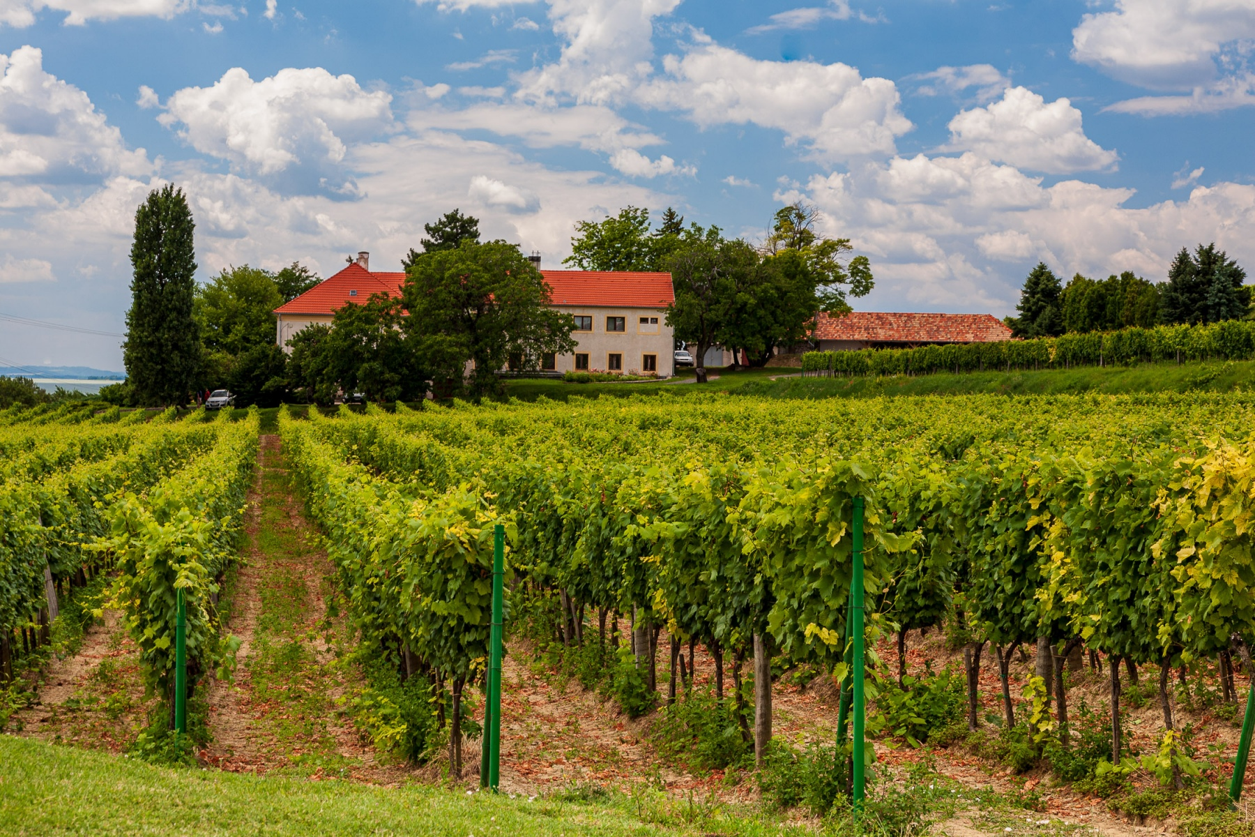 Balaton Vineyard