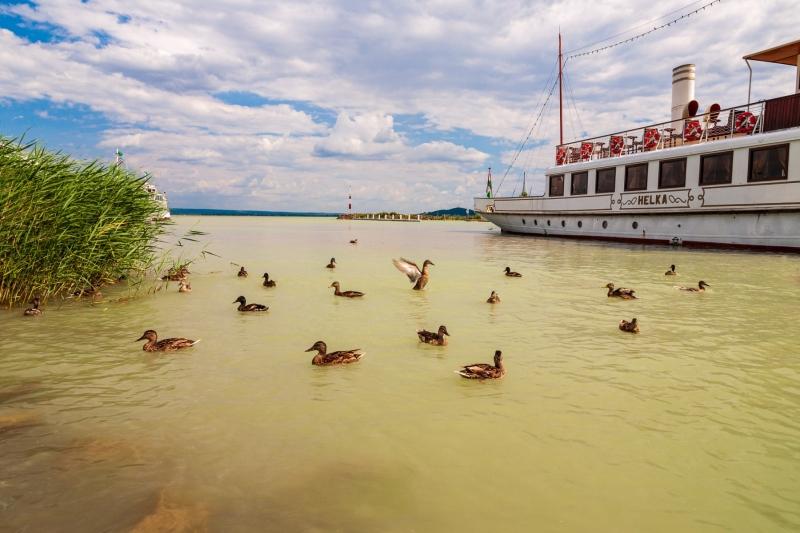 Balaton Ducks