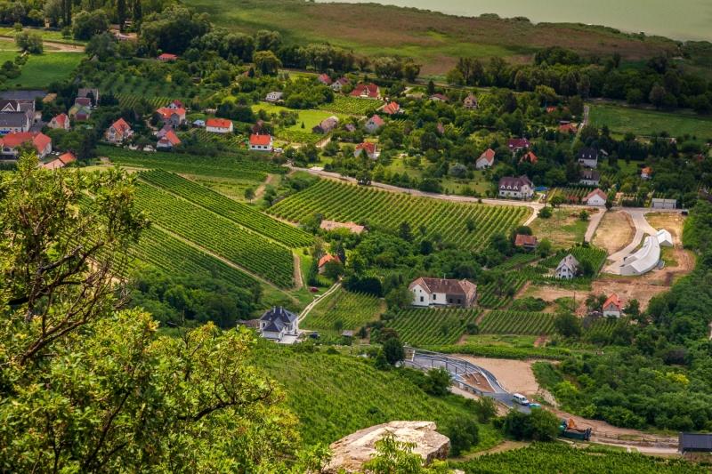 Vineyards on the shores of Lake Balaton