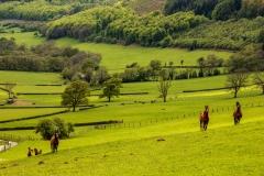 Horses, Vale of Ewyas