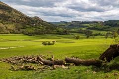Fallen tree, Vale of Ewyas