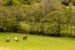 Horses, Llanthony