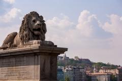 Chain Bridge Lion