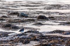 Brora seascape