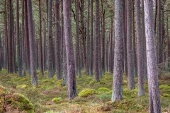 Loch Fleet woodland