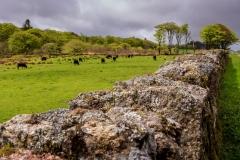 Dartmoor scene