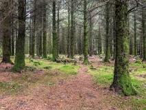 Burrator Arboretum