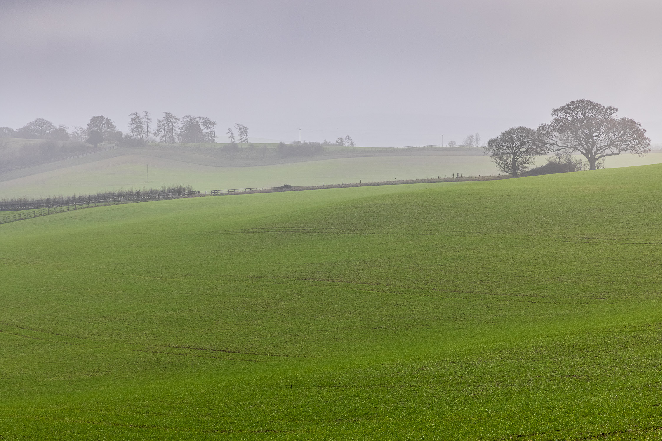 Misty afternoon on Cranborne Chase