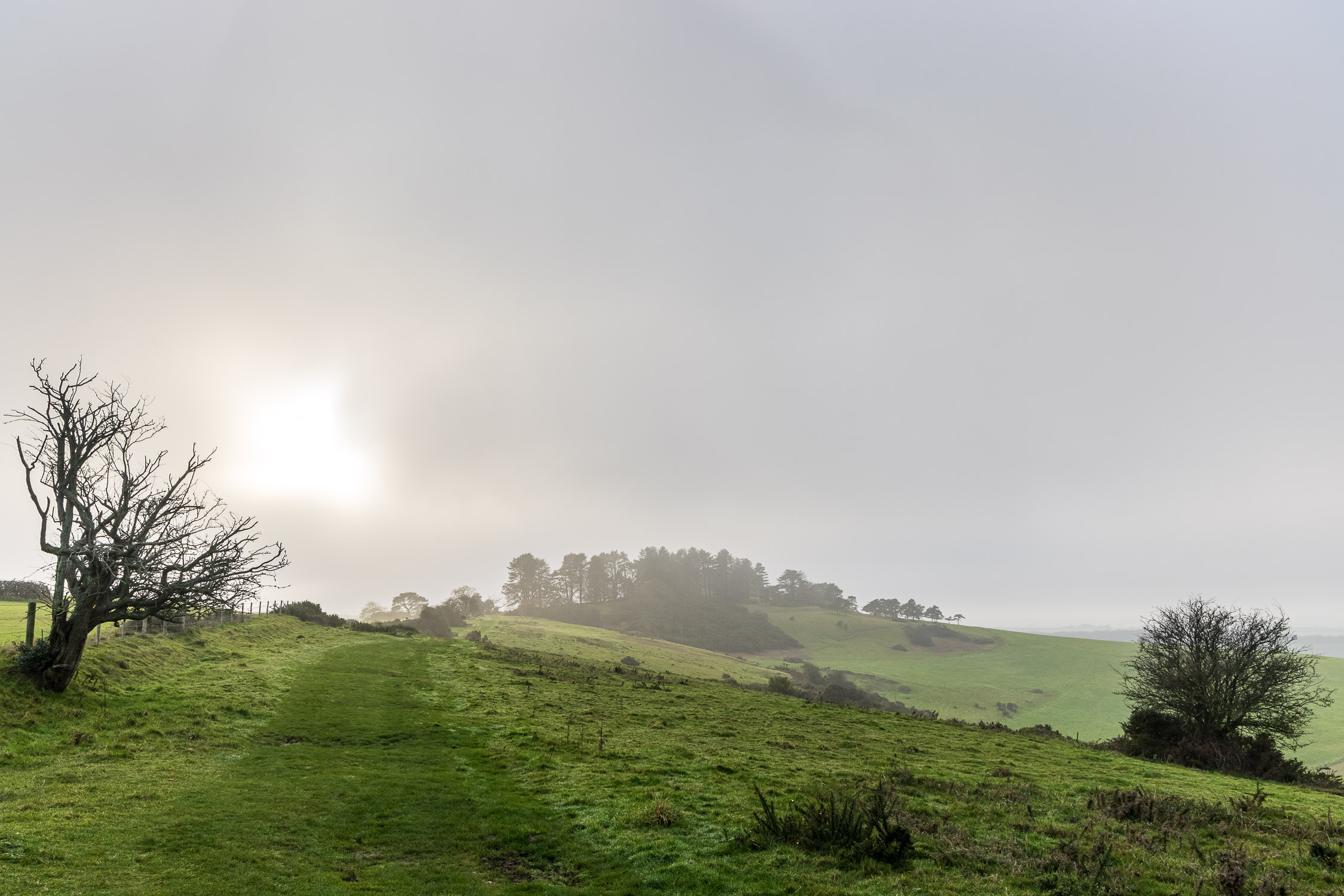 Sunlight in the fog, Penbury Knoll