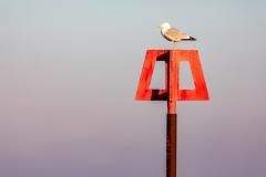 Seagull, Mudeford Beach
