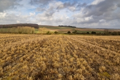 Fields near Cranborne