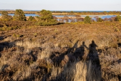 Studland and Godlingston Heath