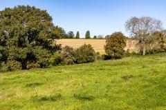 Cranborne Chase landscape near Ashmore, Dorset