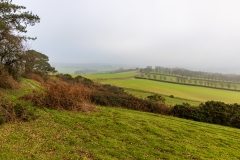 Foggy afternoon, Cranborne Chase