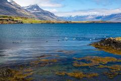View up Berufjörður, Eastfjords