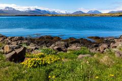 Wildflowers and blue sea at Breiðdalshreppur, Eastfjords