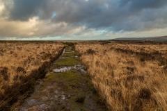 Exmoor footpath