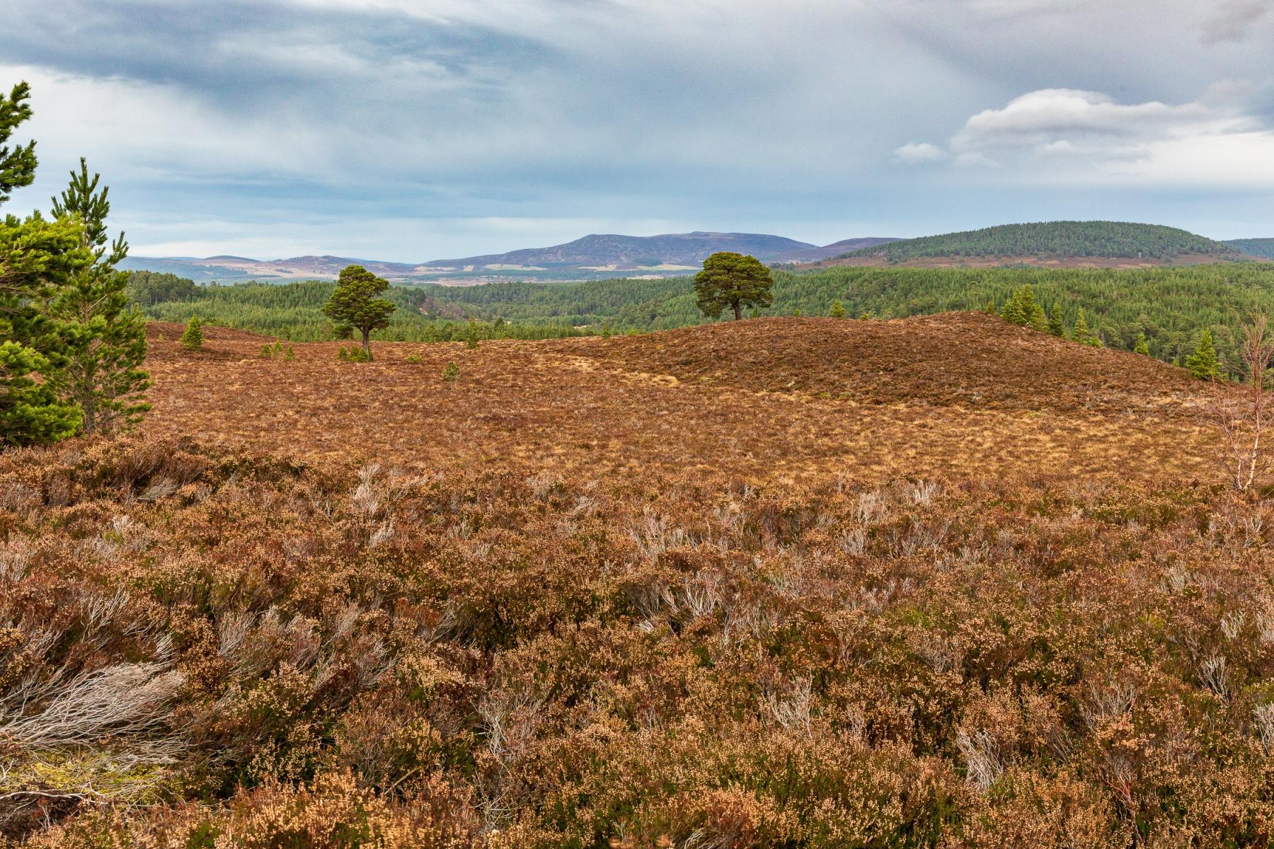 Abernethy National Nature Reserve
