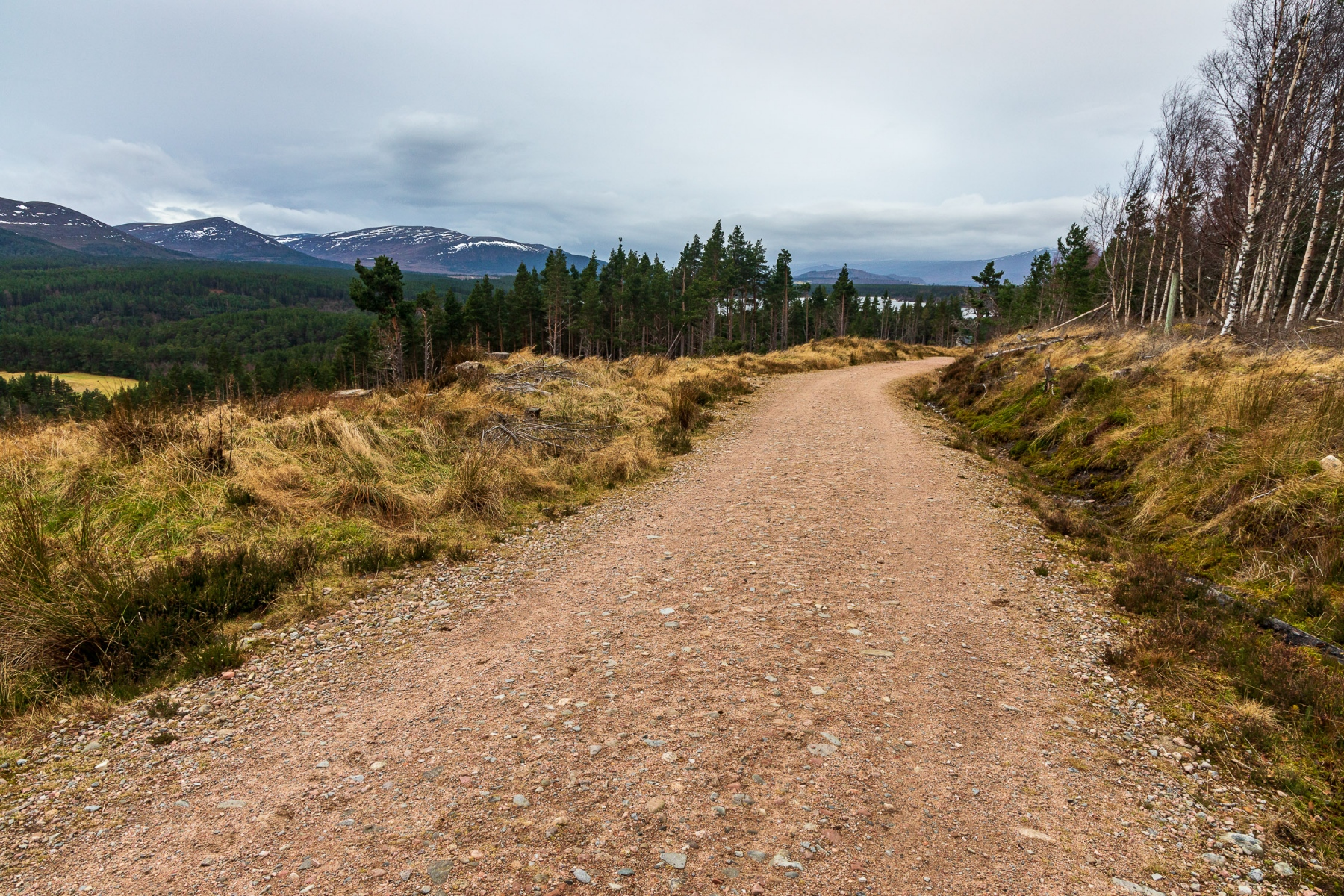 Track to Ryvoan Bothy