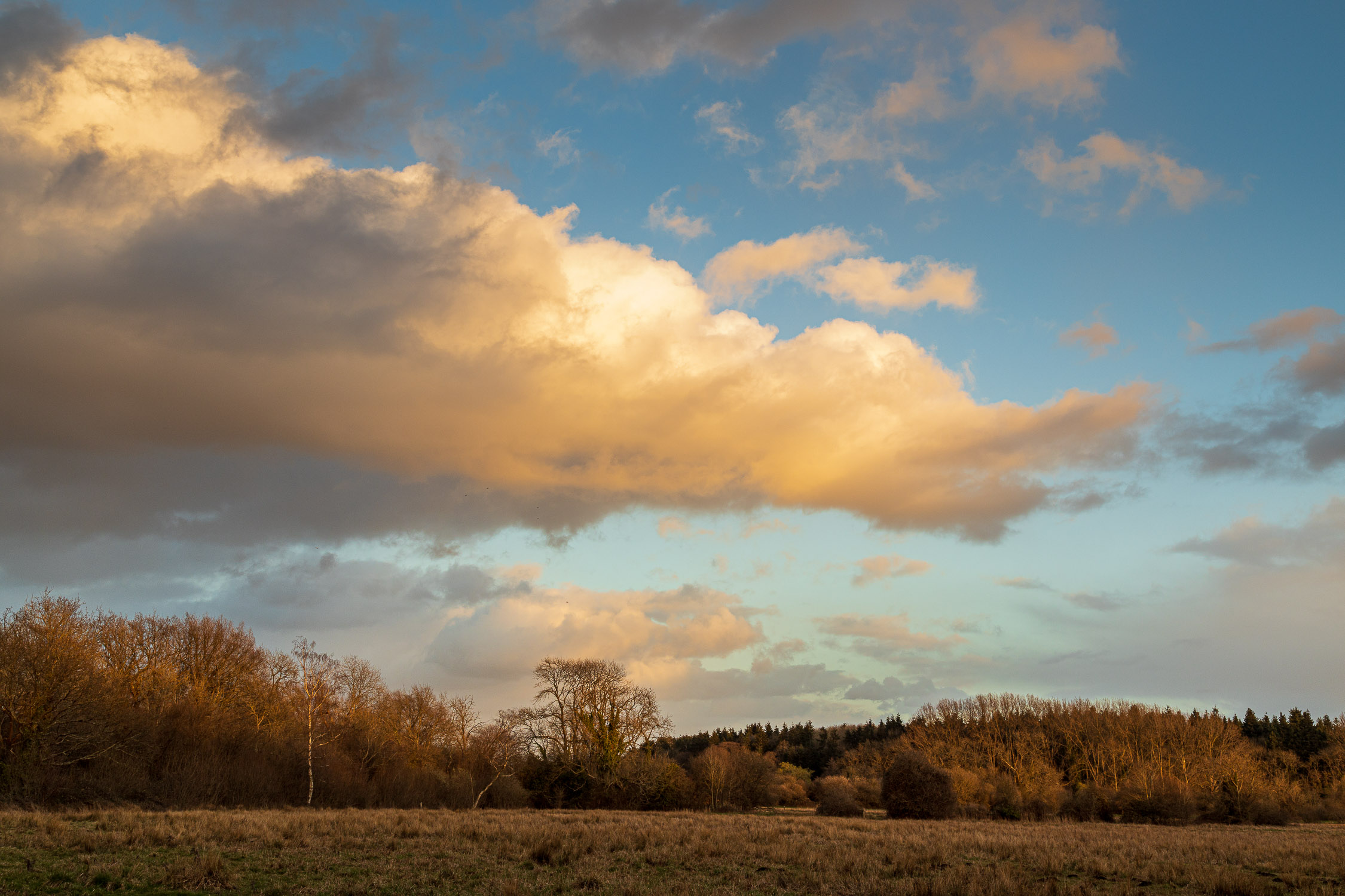 Late afternoon, Itchen valley