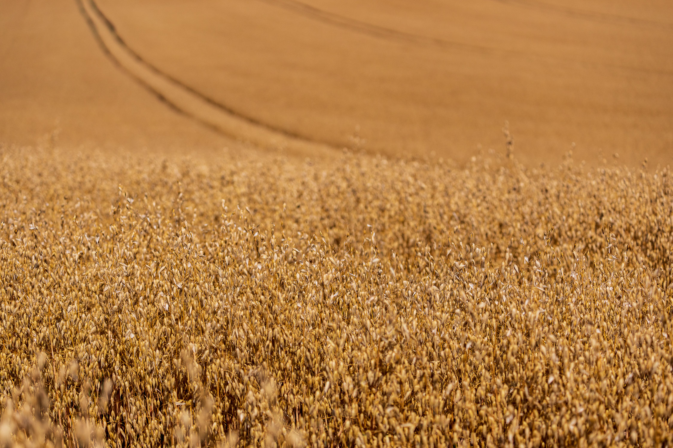 Fields of gold, Ashmansworth
