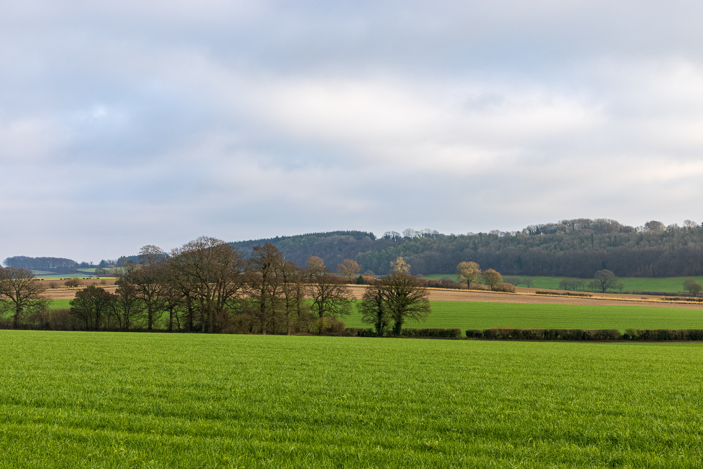 Fields, trees and hills