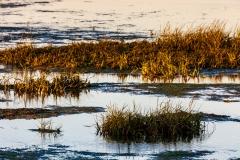 Calshot Marshes Nature Reserve