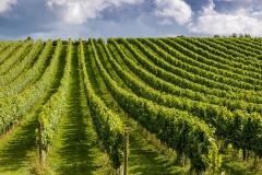 Vineyard, Test Valley