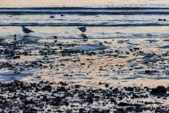 Seagulls on a silver beach