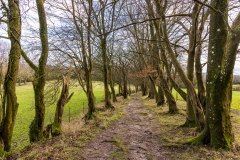 Footpath through the trees, Steep Marsh