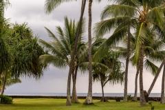 Kailua Bay palms