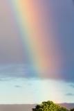 Hilo Rainbow