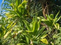 Kalalau Trail Rainforest