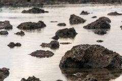 Shark's Cove rockpool