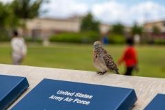 Pearl Harbor dove