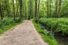 Woodland path through Friezland Wood, Tunbridge Wells