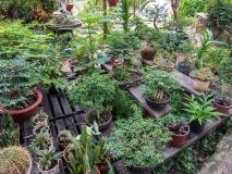 Rest area garden