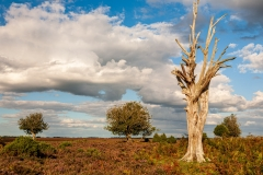 Lodge Hill, New Forest
