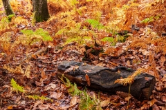 Rotting log, New Forest