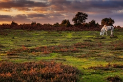 Autumn evening, New Forest