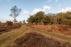New Forest trails near Fritham
