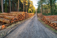 Logging piles, New Forest