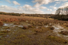 New Forest near Latchmore Brook