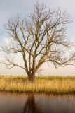 Broadland Tree