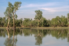 Mary River Billabong