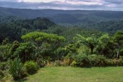Waipoua Forest park
