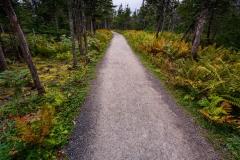 Skyline Trail, Cape Breton Highlands