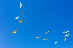 Neils Harbour seagulls