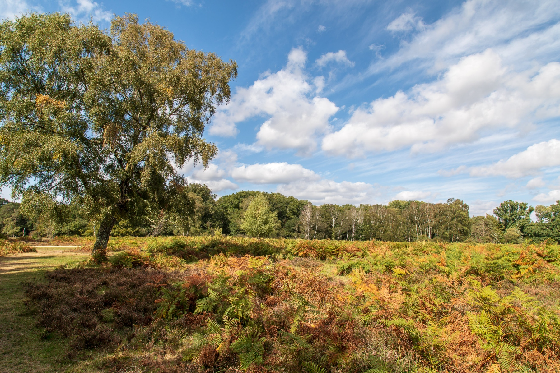 A hint of Autumn in the New Forest